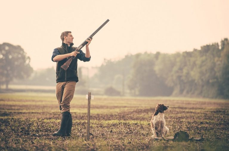 Wappenshall-Classic-Partridge-Shooting-Dog